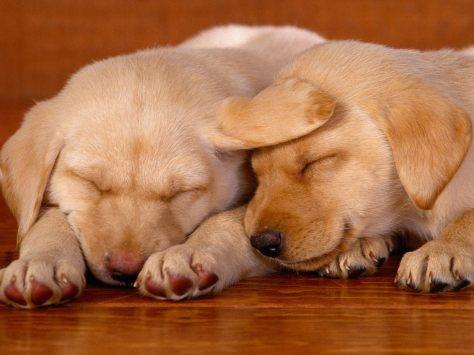 Sleeping on the Job Puppies