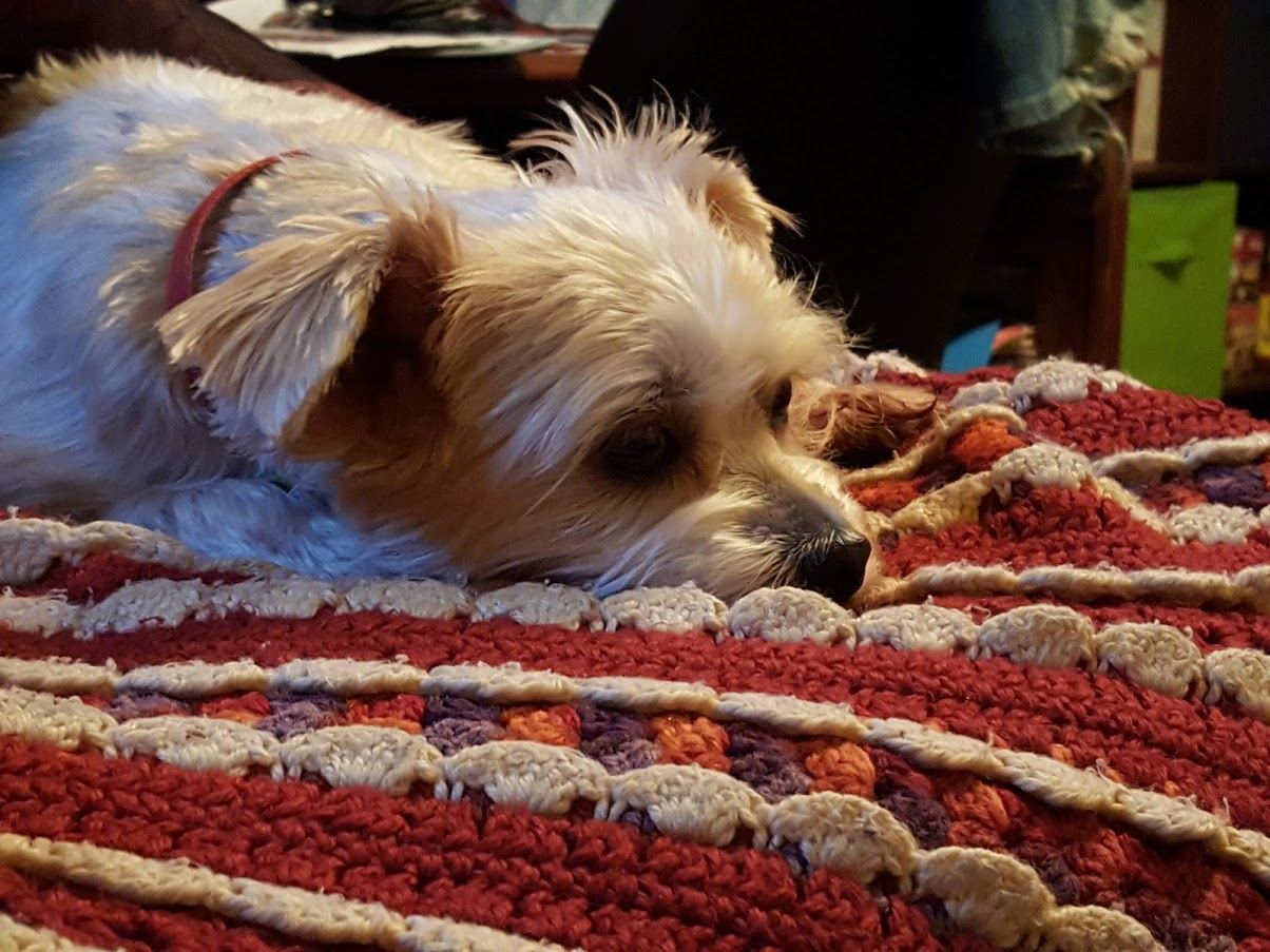 Zoey Needs Tumor Removed toLive